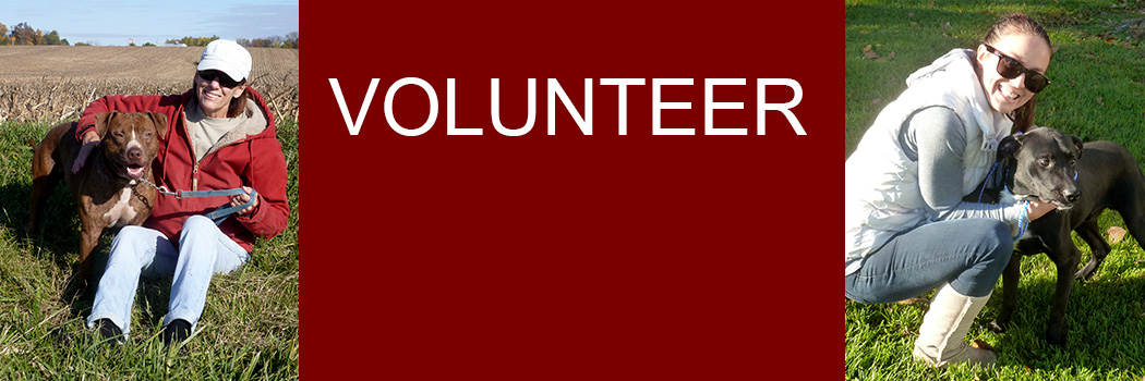 Volunteer - find out how you can help